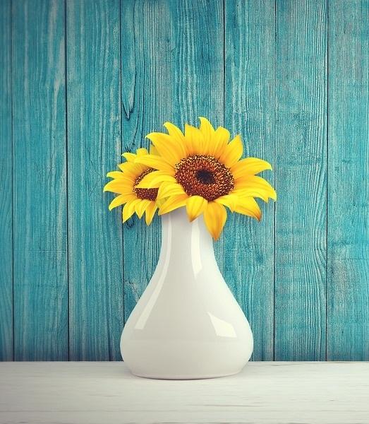 sun-flower-3292932_960_720